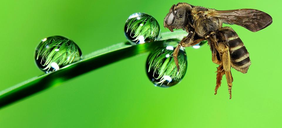 De strategie naar klimaatbestendige tuinen